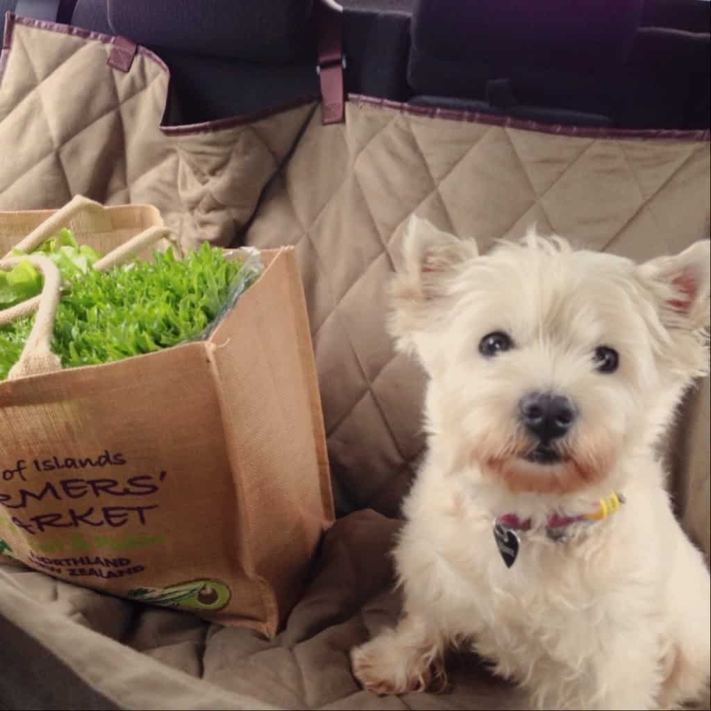 The Bay of Islands Farmers Market is dog friendly