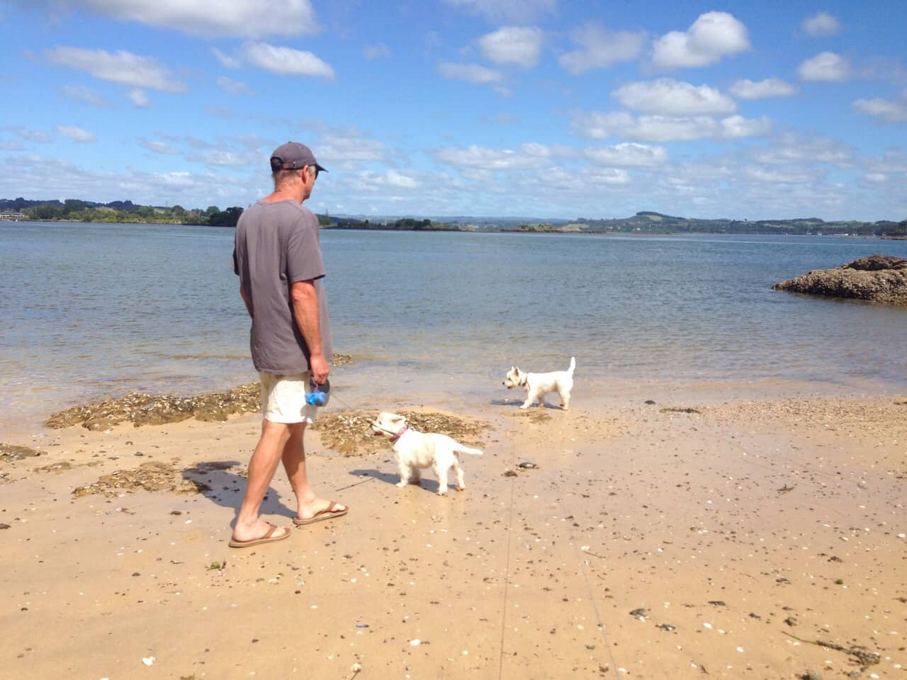 Wharau Road beach Kerikeri dogs
