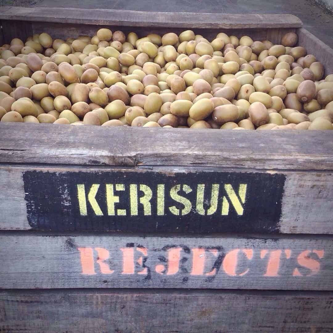This is one real insider secret: you can get free golden kiwi fruit from one of the major orchards in Kerikeri! The fruit is perfect: the rumour I've heard is that they're too big for export markets, but I don't know if that's true or not. This big reject bin is at Orangewood on Kapiro Road, Kerikeri. I'm not sure what the duration of the golden kiwi fruit harvest is, but we went and grabbed a big bag full of this delicious Kerikeri fruit in May.