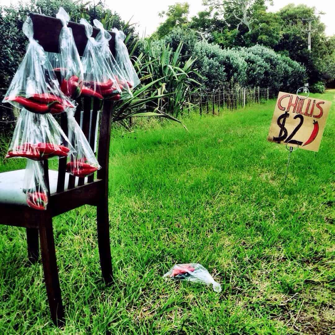 I love how innovative this roadside stall is: they didn't worry that they didn't have a table - because they have a chair to use! Kiwi ingenuity at its best. This chilli stall was spotted on Kerikeri Inlet Road.