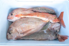 We-caught-an-amazing-number-of-fish-on-one-of-our-charters